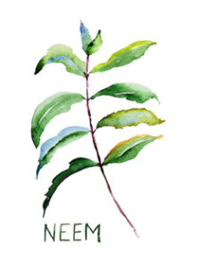 Neem Herpes Supplement